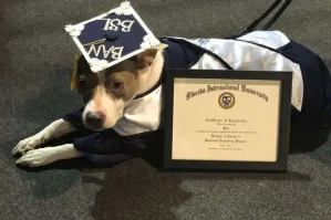 Service dog makes FIU history, receives certificate of completion